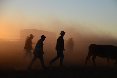 Outback Dawn Muster