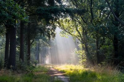 Raining Light