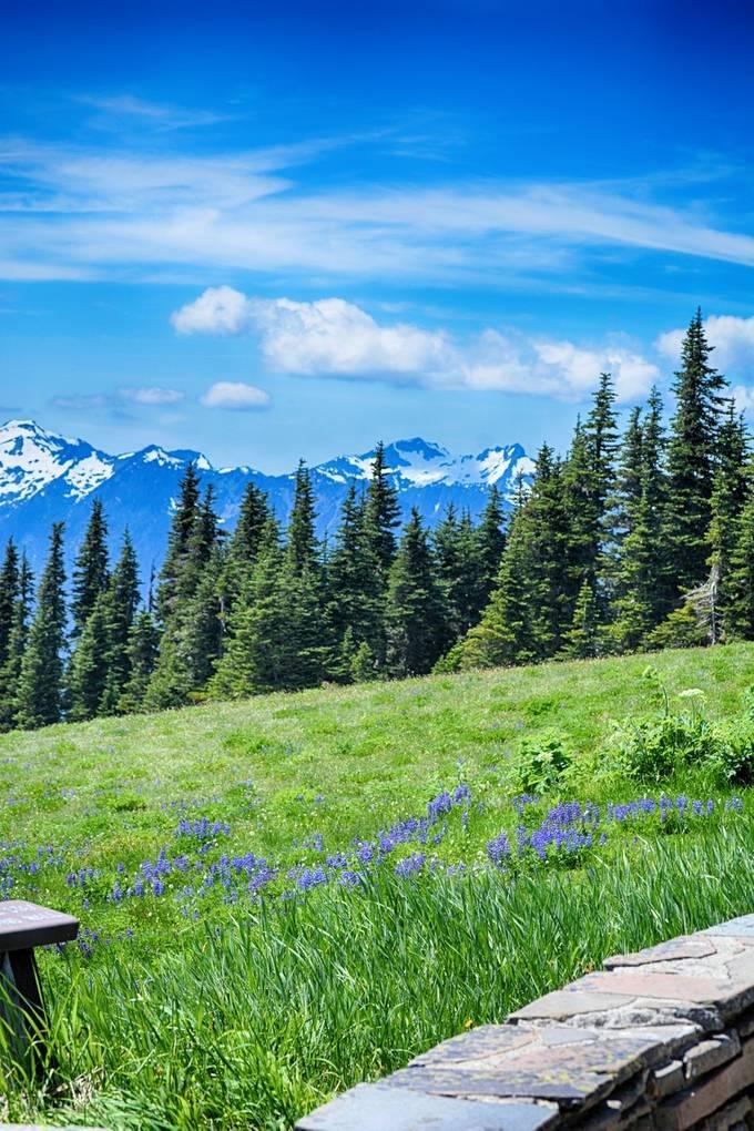 Blue & Purple Mountains