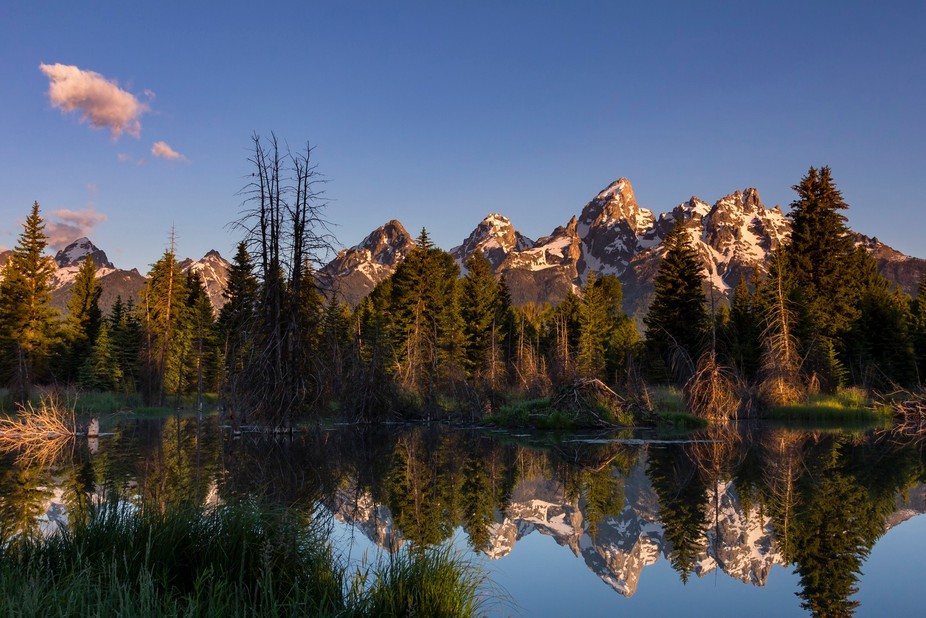 Sunrise paints the eastern face of the Teton Range as it is reflected in the beaver pond at Schwa...