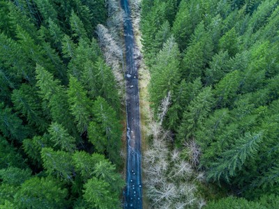 Forest Service Road from Above