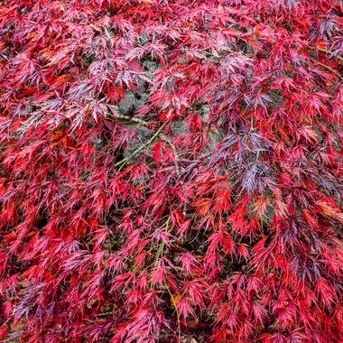 Colours of Mount Wilson (17) - NSW, Australia