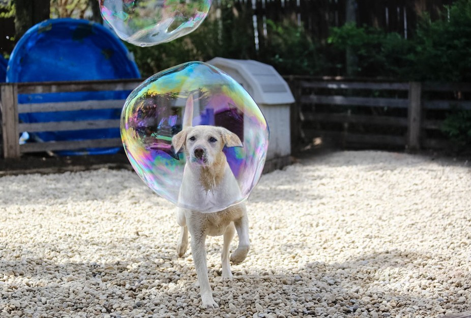 A Lab, a bubble, being in the right place at the right time.