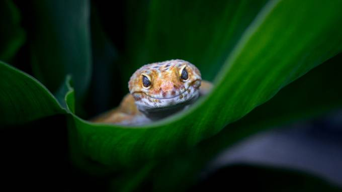 Oh hey! :D by akphotographystudio - Macro And Patterns Photo Contest