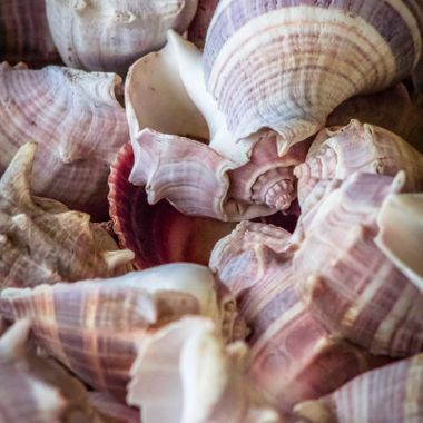Had a big box of conch shells lying around, ended up being a nice picture to take