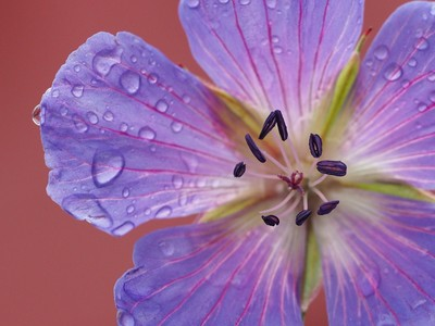 In flower
