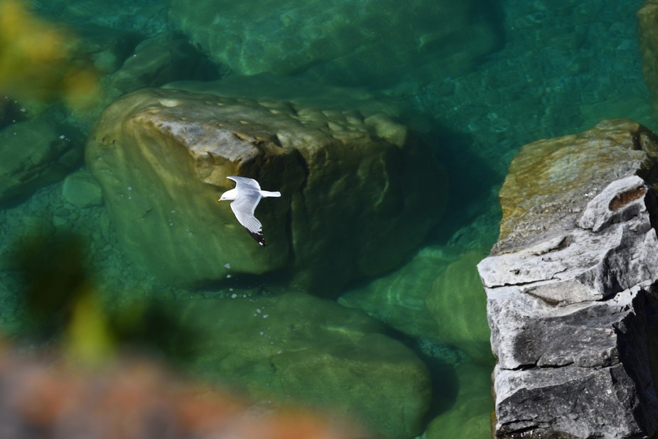 A gull from above...