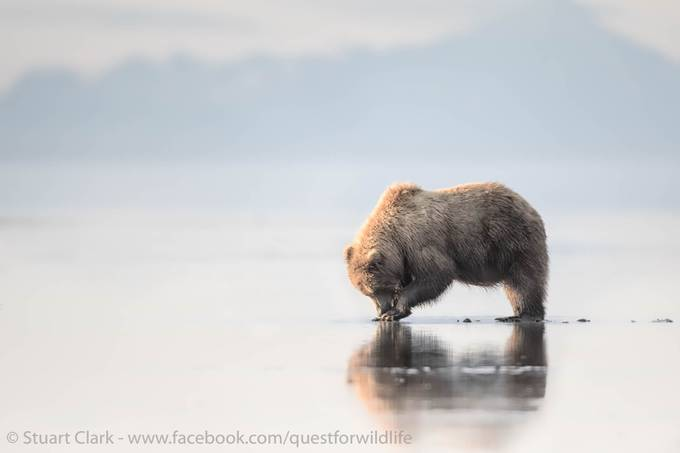 Buried Treasure by questforwildlife - Isolated Photo Contest