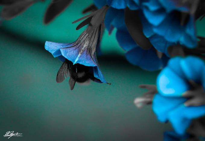 Colour Blue by AmatuerSnapper - Macro And Patterns Photo Contest