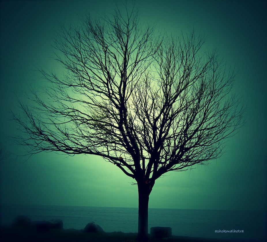 "driving past small boats in a suburb of Stockholm, saw this tree  standing, "" all alone ..."