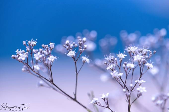 Wild Baby's Breath by kenvanevery - Macro And Patterns Photo Contest