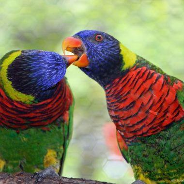 Parrots; Ft. Lauderdale, FL www.just4joy.com