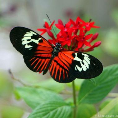 Butterfly World Ft. Lauderdale, FL.