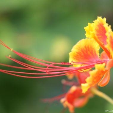 Tropical Florida Flower www.just4joy.com