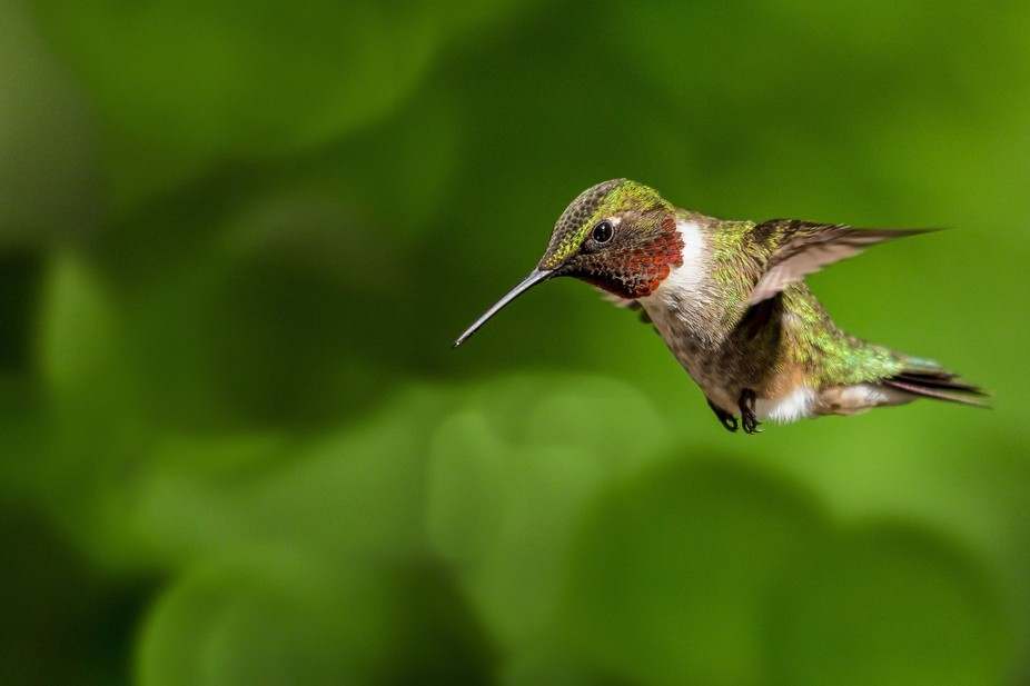 Last day on holiday and snapped a good shot of a humming bird. Not easy since they don't stay s...