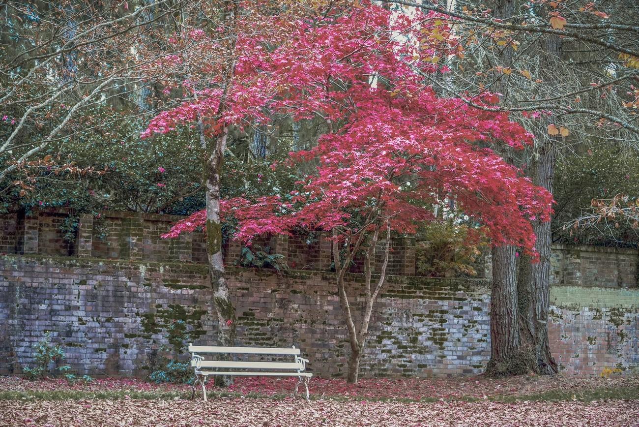 Colours of Mount Wilson (20) - NSW, Australia