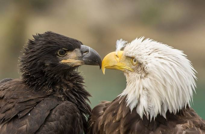 untitled (99 of 278) Mother and Child by mleary333 - Just Eagles Photo Contest