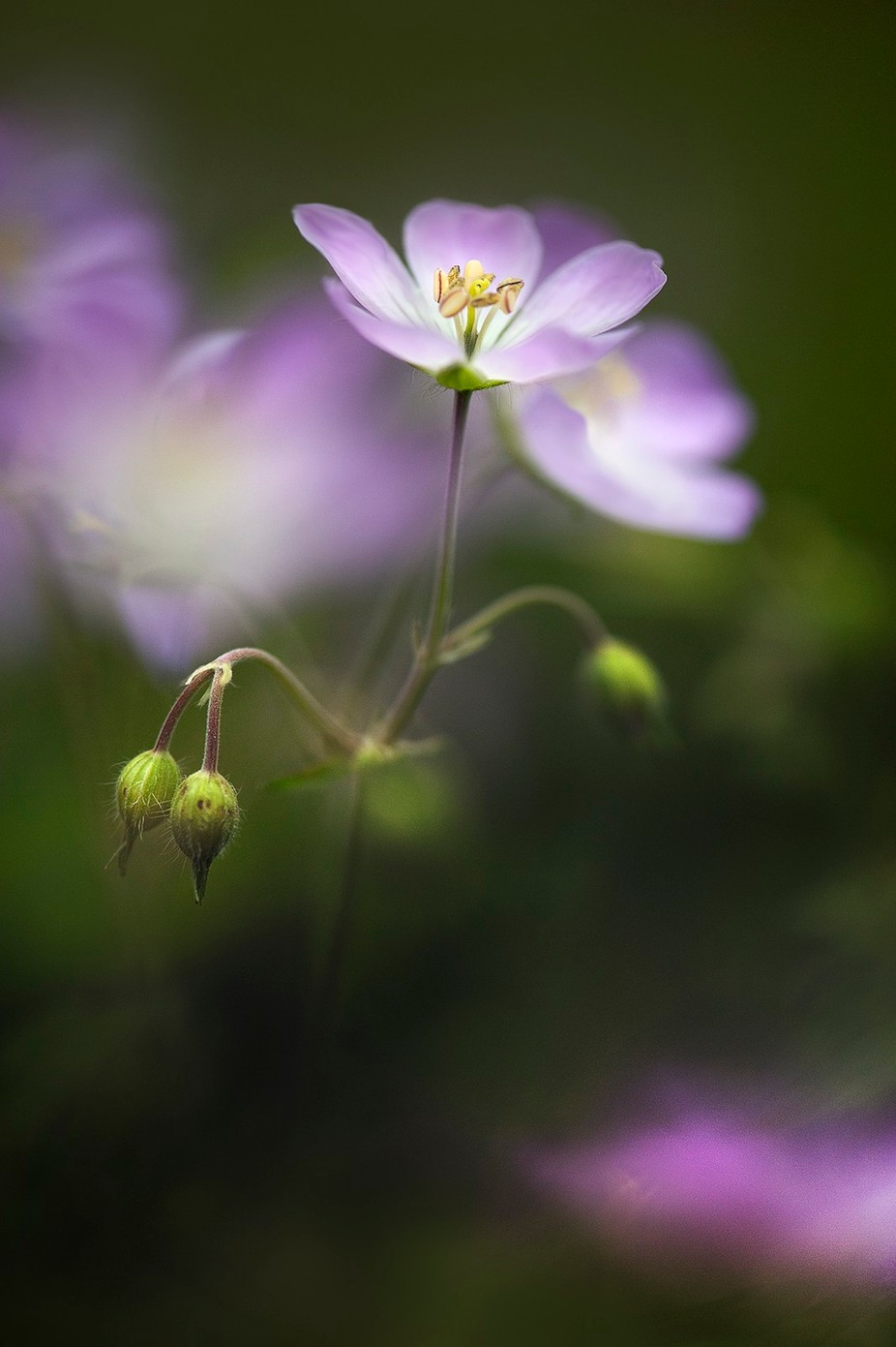 Flower and buds by MJLara - Macro And Patterns Photo Contest