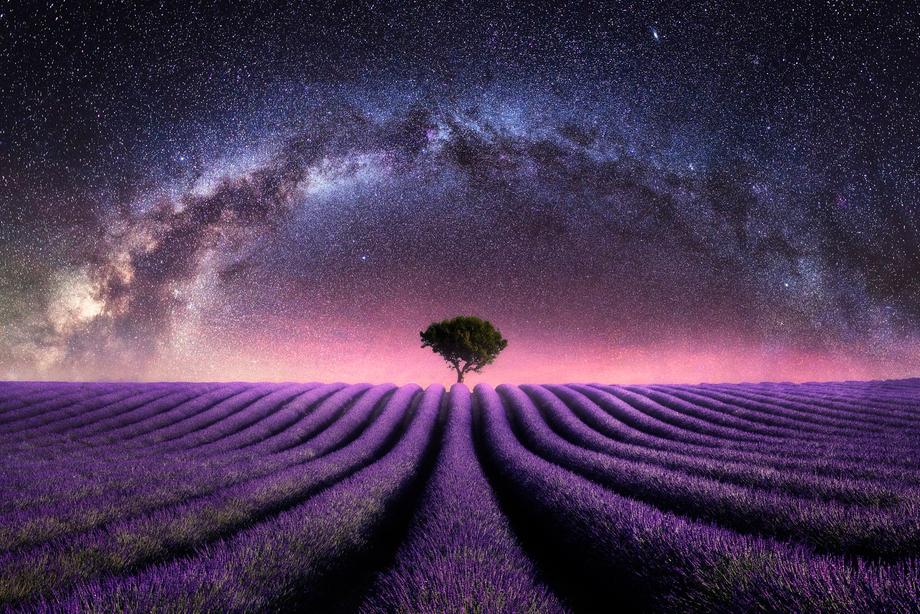 Lavender field Milky Way