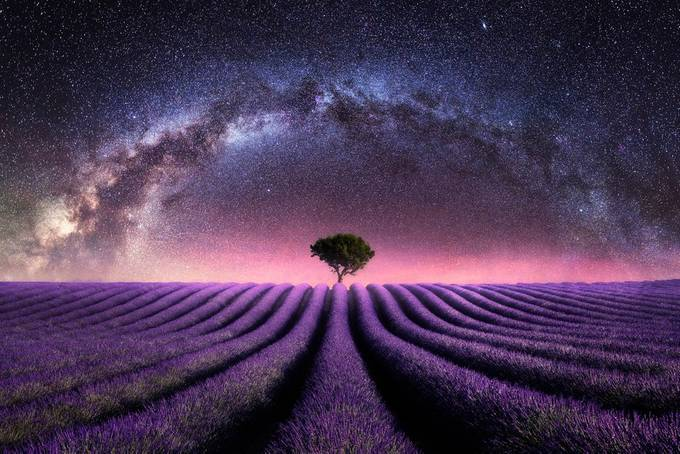 Lavender field Milky Way by madspeteriversen - Shades Of Purple Project