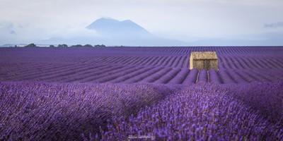 Cabane sur le plateau de Valensole - Provence - France