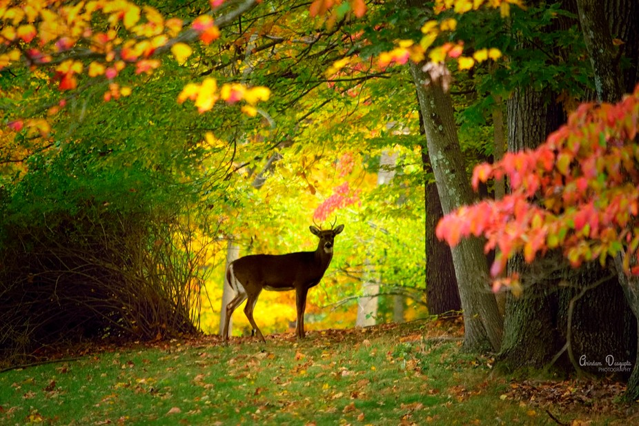 It was taken on an autumn afternoon. He was busy eating grass when he heard me sneaking behind a ...