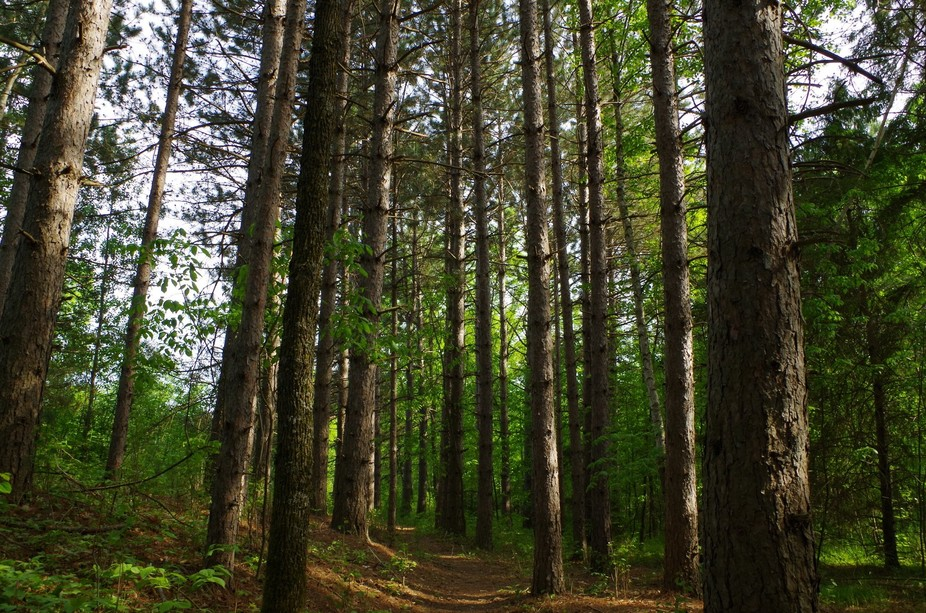 A private path leading to the water from our campground. It was lined with these beautiful pine t...