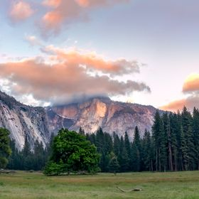 While observing deer eat, a beautiful cloud started clinging to Half Dome. Call me clingy but I love it :-)