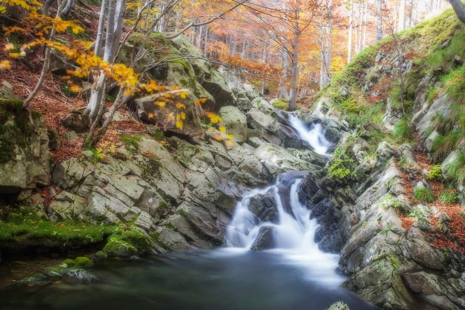 A small river immersed in a beech forest in autumn