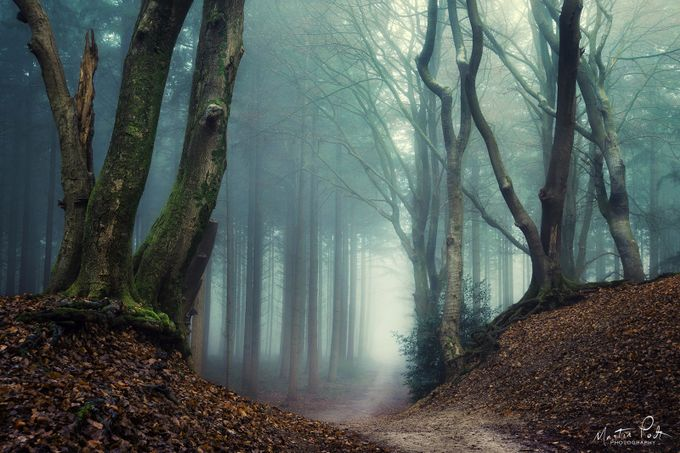 Serpents by martinpodt - Covers Photo Contest Vol 40