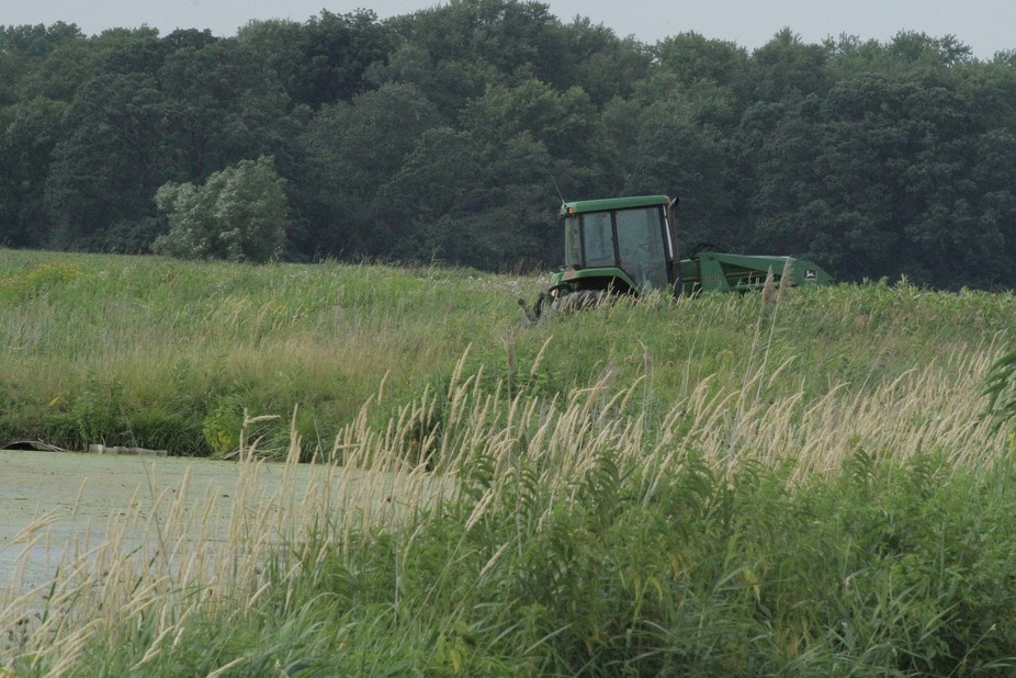 A tractor used for grading a path in the swamp was left to be overtaken by the wildlife refuge.