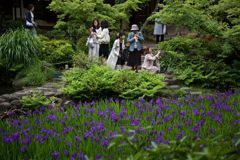 Nezu Museum gardens, Tokyo, Japan