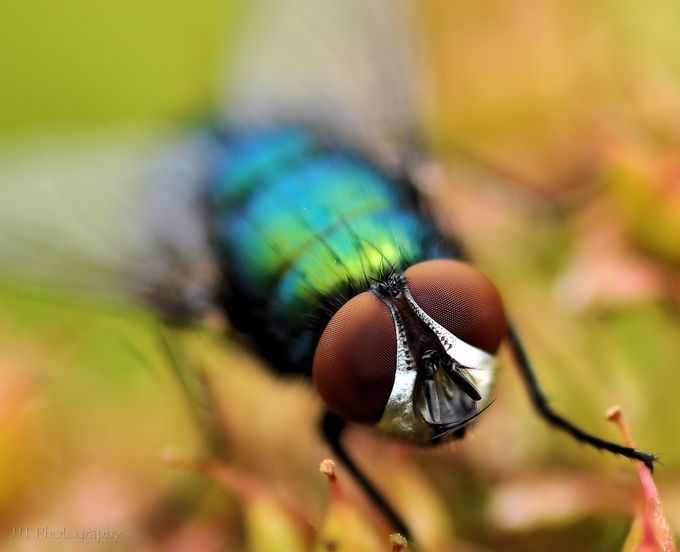 Fly macro  by jasontomlinson - Depth In Nature Photo Contest