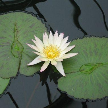Taken in Kew Botanic Gardens