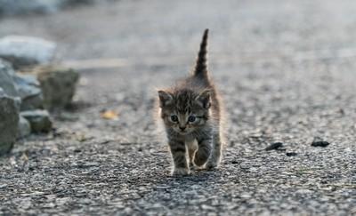 Tabby On A Stroll