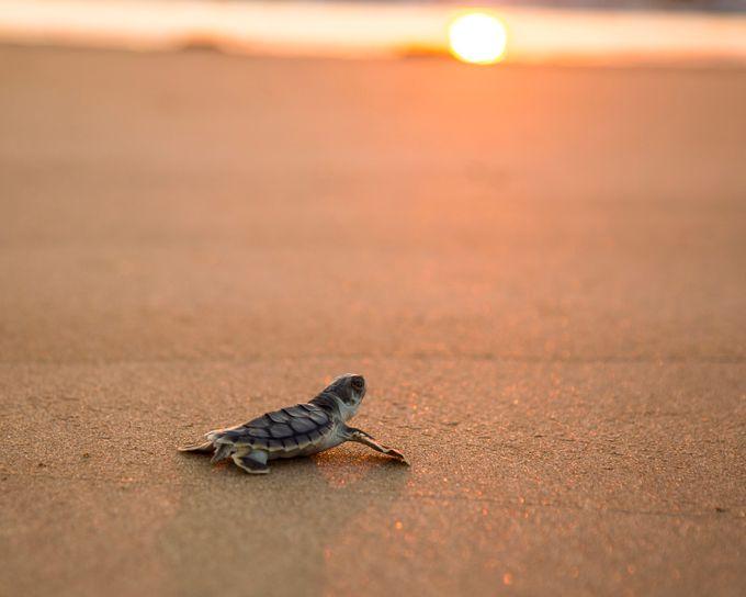 Survivor by tomrexjessett - Animals And Water Photo Contest
