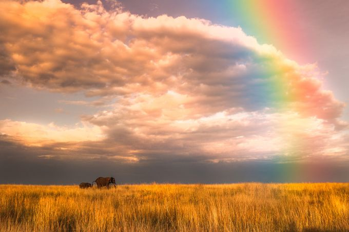 Kenya Rainbow by WorldPix - Bright Colors In Nature Photo Contest
