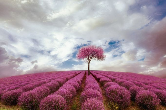 Deep pink by christoslamprianidis - Pink Photo Contest