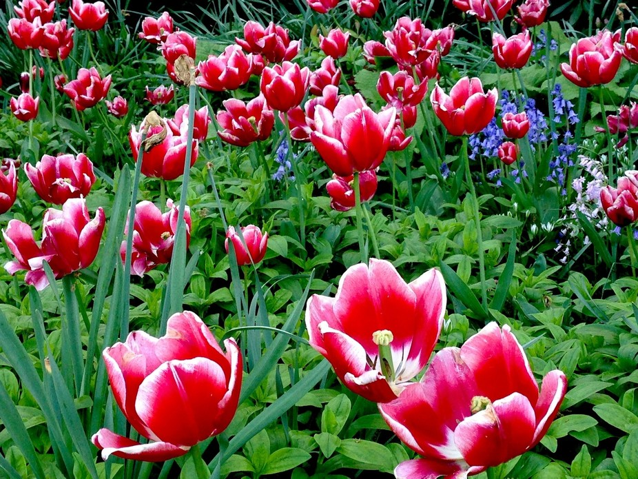 I got this picture with my iPhone5 in a beautiful spring day at the Planten un Blumen in Hamburg,...