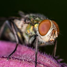 A closeup shot of an house fly eye!!