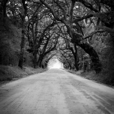 Botney Bay Road tree tunnel