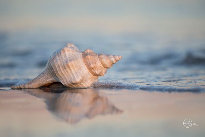 41 Relaxing Shots Of Shells That'll Make You Wish You Were By The Sea