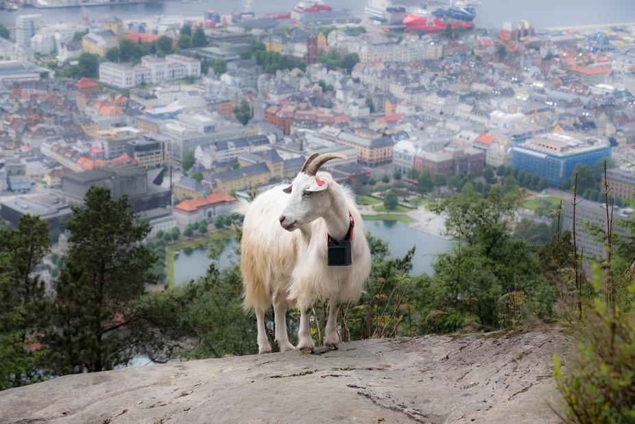Overlooking Bergen, Norway