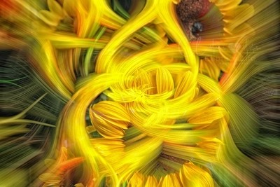 Fate of a Sunflower... ヅ