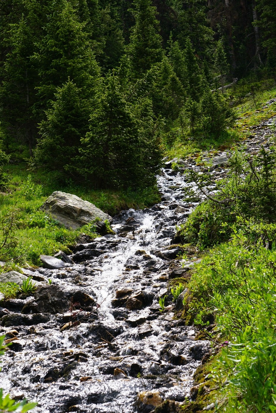 Small waterfall hidden on a hiking trail in the Rocky Mountain National Park.