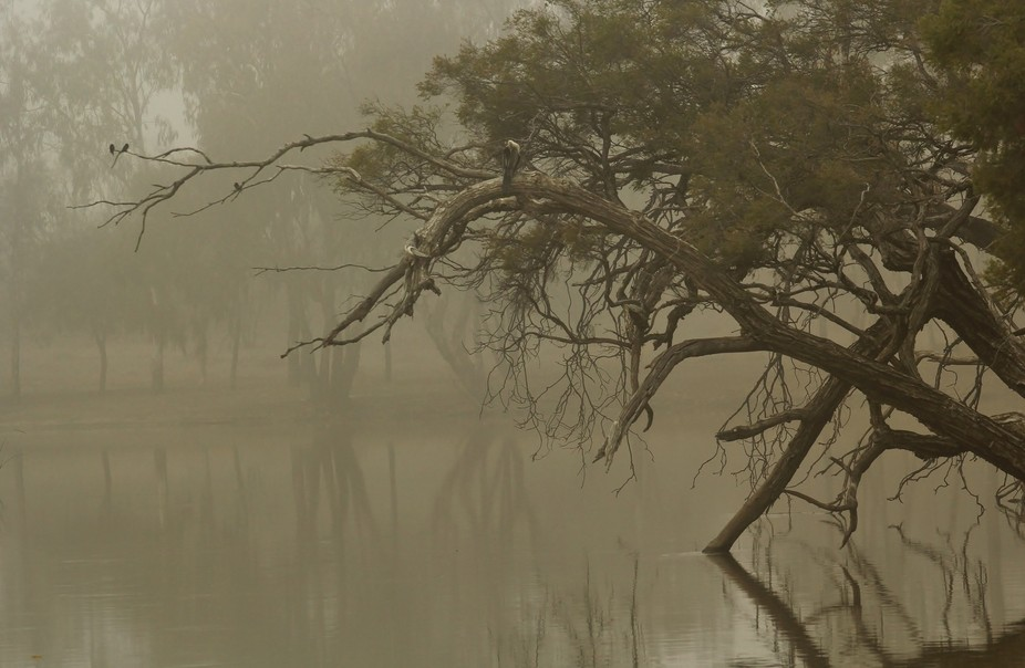 Weir River at Mungindi, NSW. The fog settled in giving the river scene a quiet calm appeal. Birds...