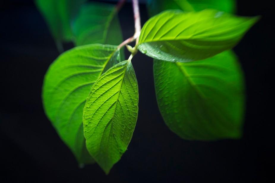 close up,macro,leaf,green,beauty,