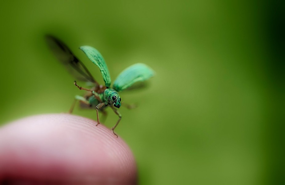 A cute little green bug who stoped to say hello and left dancing with the wind...