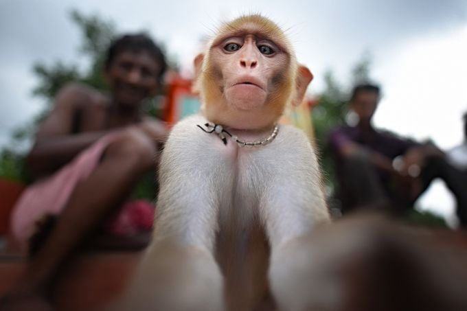 my selfie by chintudutta - Monkeys And Apes Photo Contest
