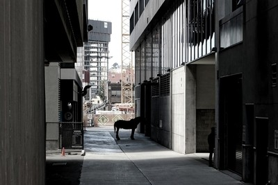 Alley Horse